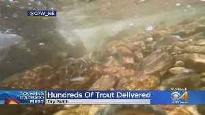 Hundreds Of Greenback Cutthroat Trout Now Stocked In Dry Gulch [Video]