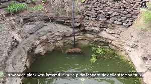 Rescuers save leopard from drowning in 15ft well [Video]