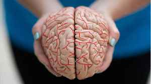 Scientists Say Parkinson's Research Should Focus On Two Brain Chemicals Instead Of One [Video]