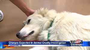 Charges expected in Limestone County animal cruelty investigation [Video]