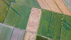 Giant portrait of Neil Armstrong created in Italy wheat field for Apollo 11 anniversary [Video]