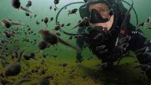 Mesmerizing Moment Scuba Diver Swims With Hundreds Of Tadpoles [Video]