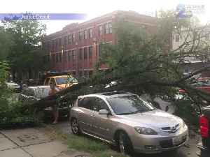 Storms and heavy winds in Baltimore cause fallen trees and damaged cars [Video]