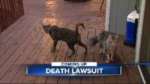 Farmington Hills couple files lawsuit after record-holding cats killed in fire [Video]