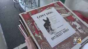 New Jersey Pizzeria Putting Missing Pet Flyers On Pizza Boxes [Video]