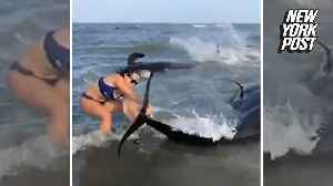 Dozens of beached whales saved by brave beachgoers [Video]
