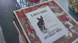 New Jersey Pizza Shop Owner Puts Flyers Of Missing Pets On Boxes [Video]