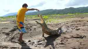Costa Rican man faces down hungry crocodiles to make ends meet [Video]