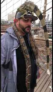 NYC man has an IGUANA for a hat and a SNAKE for a scarf [Video]