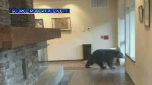 Bear Walks Into South Lake Tahoe City Hall [Video]