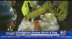 After Rescuing Owner, Firefighters Rush Dog To Veterinarian In Critical Condition [Video]
