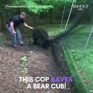 Officer saves a bear cub that was trapped in a net [Video]