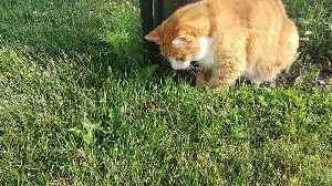 Gentle cat plays with new mouse friend [Video]