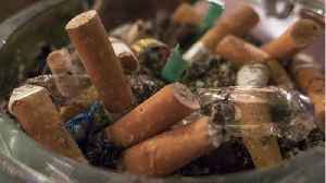 The Bad Thing Littered Cigarette Butts Do To Plants [Video]
