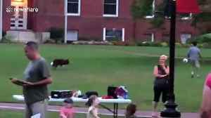 Canada park blessed by talented pup keeping football up in the air with owner [Video]