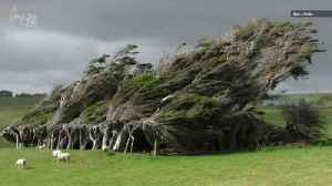 Wacky, Windblown Trees Grow Sideways on New Zealand's Southernmost Point [Video]