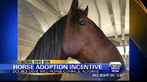 Wild horses from Modoc County need homes [Video]