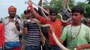 Indian devotees carry hundreds of snakes in bizarre procession during Hindu festival [Video]