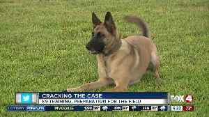 Cracking the Case: Paws on Patrol [Video]