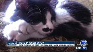 'Mutilated,' 'dismembered' cats found in Highlands Ranch neighborhood [Video]