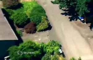 Bear loses bearings, gets lost in the suburbs [Video]