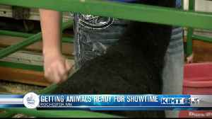 Getting animals ready for the fair [Video]