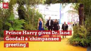The Friendship Between Prince Harry And Dr. Jane Goodall [Video]