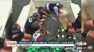 Manatee death rates rise in Florida [Video]