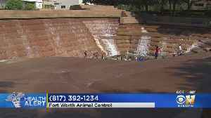 Bat Found At Fort Worth Water Gardens Tests Positive For Rabies [Video]