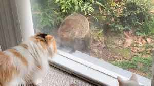 Rare Moment When A Groundhog Greets A Pair Of House Cats In Curiously Cute Occasion [Video]