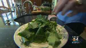 Leafy Greens Contaminated [Video]
