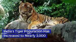 India's Tiger Population Has Increased to Nearly 3,000 [Video]