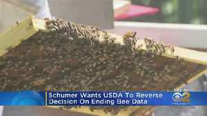 Schumer Urges Feds To Keep Tracking Honey Bee Population [Video]