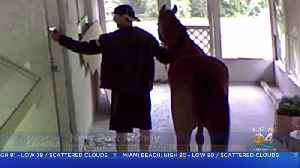 Man With Horse Charged With Breaking Into Private Property In Pasco County [Video]