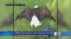 Pennsylvania Game Commission Searching For Person Who Shot, Killed Bald Eagle In Erie County [Video]