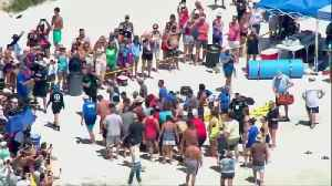 Rescuers rush to save beached whales in Florida [Video]