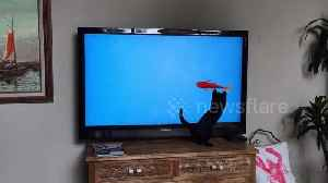 Confused kitten attacks TV fish so aggressively he falls off the stand [Video]