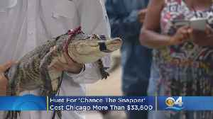 Hunt For 'Chance The Snapper,' The Gator Caught By Florida Trapper, Cost Chicago More Than $33,600 [Video]