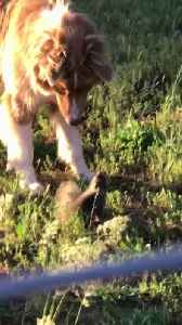 Furry Friends Having Fun in the Yard [Video]