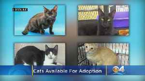 These Miami-Based Kitties Are Up For Adoption And In Need Of A Good Home [Video]