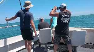 Shark Bites Dude on Boat Deck [Video]