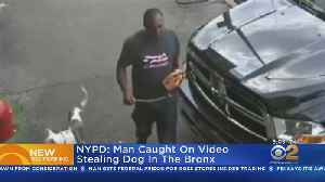 NYPD: Man Caught On Video Stealing Dog In The Bronx [Video]