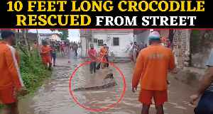 NDRF Team rescued 10 feet long crocodile from flooded street in Vadodara: video viral| Oneindia News [Video]