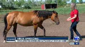 Virus not common to Colorado horses forces more than 200 properties under quarantine [Video]