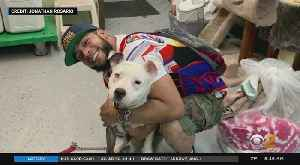 Stolen Dog Reunited With Owner [Video]