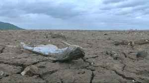 News video: Drought reveals lost temple in Thailand