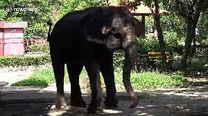 'Mistreated' elephants perform for tourists at 'controversial' Thai zoo [Video]