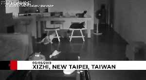Cats in Taipei get a fright as 6.0-magnitude earthquake makes buildings tremble [Video]