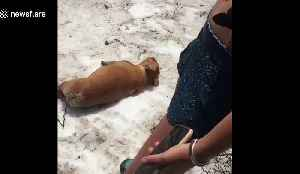 Funny dog finds joy in sliding himself down a hill repeatedly [Video]