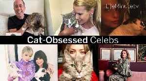 Cat-Obsessed Celebs [Video]